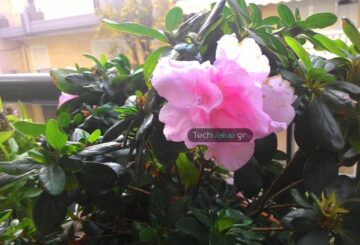 Asus ZenFone 5 camera review