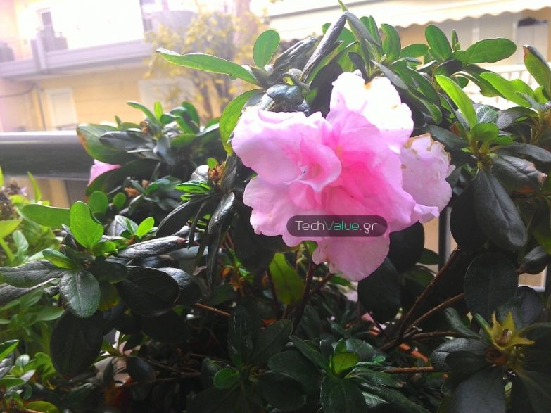 Asus ZenFone 5 camera review flower