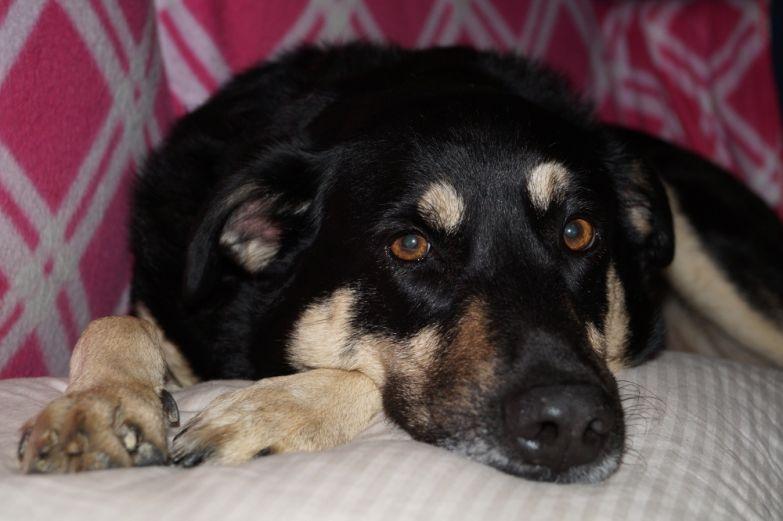 Sony A58 dog