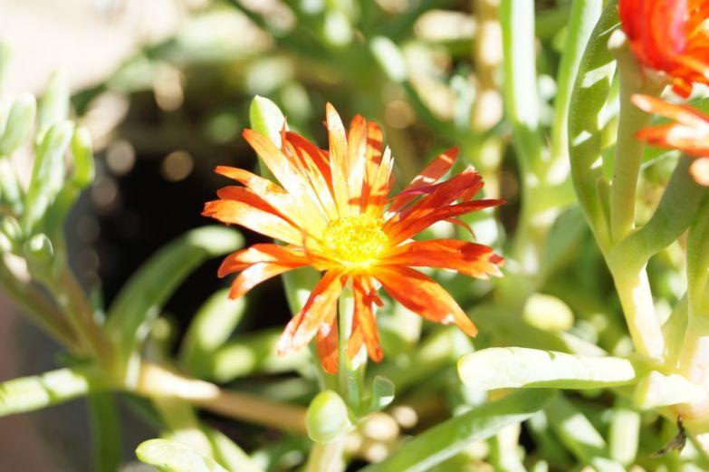 Sony A58 flower
