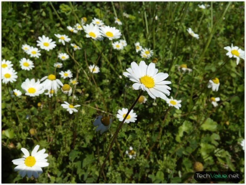 iocean X7 HD camera flower