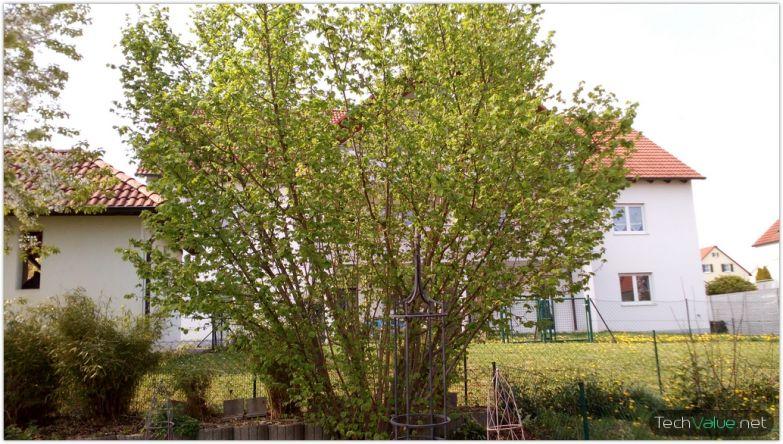 cubot x6 tree
