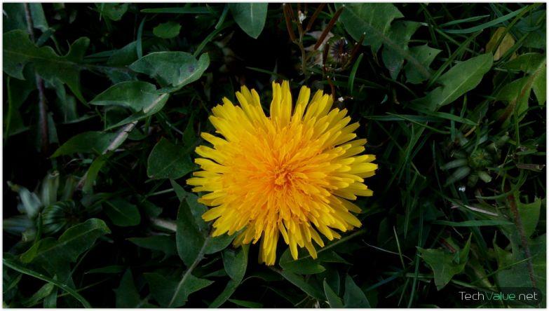 cubot x6 flower