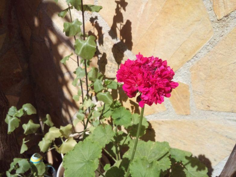 LG_Magna_camera_sample_flower