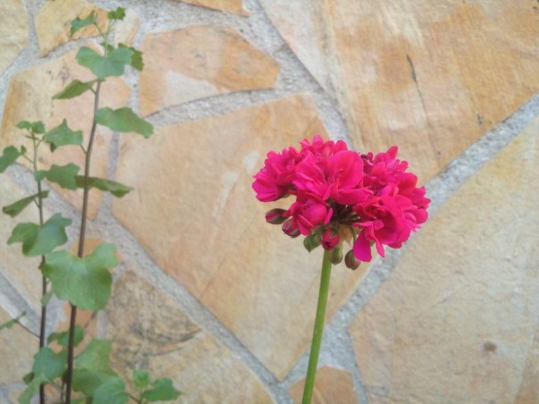 LG_Magna_camera_sample_flower_1
